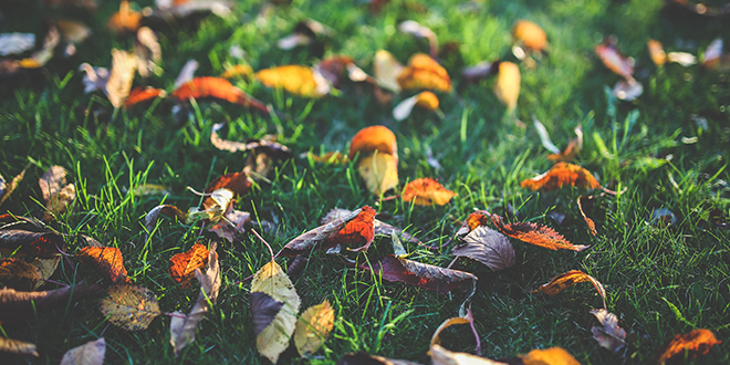 What Fall Leaves Teach Us About Jesus Christ - FHE Lesson