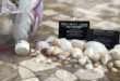 Seashells, Trash, And The Book Of Mormon Teachings On Karma