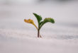 "3 Ways to Add ""Miracle-Grow"" to Your Seed of Faith"