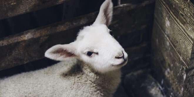 Becoming a Shepherd   27 November 2018