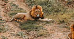 Peace With a Lion | 25 February 2019