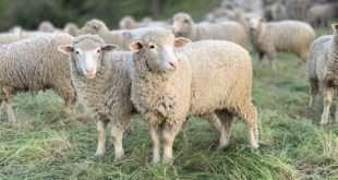 Nourish the Flock of Christ | 13 January 2021