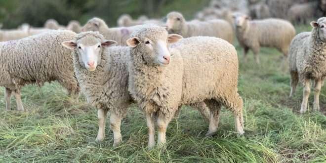 Nourish the Flock of Christ   13 January 2021